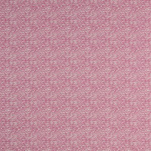 Baby Zebra in Pink