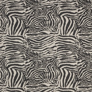 Zebra in Charcoal