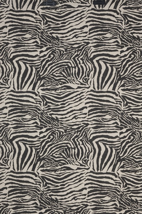 Zebra in Charcoal 1
