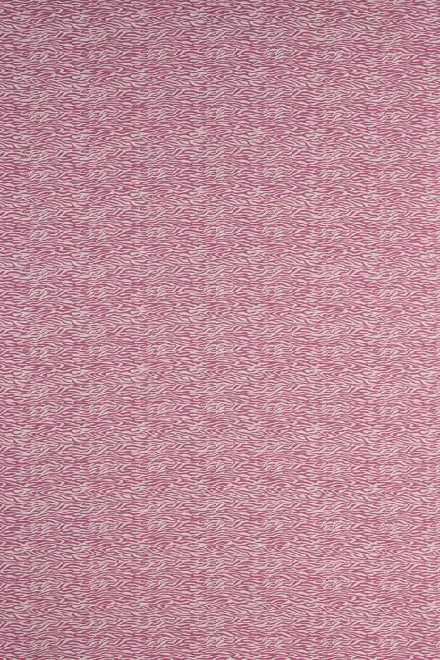 Baby Zebra in Pink 1