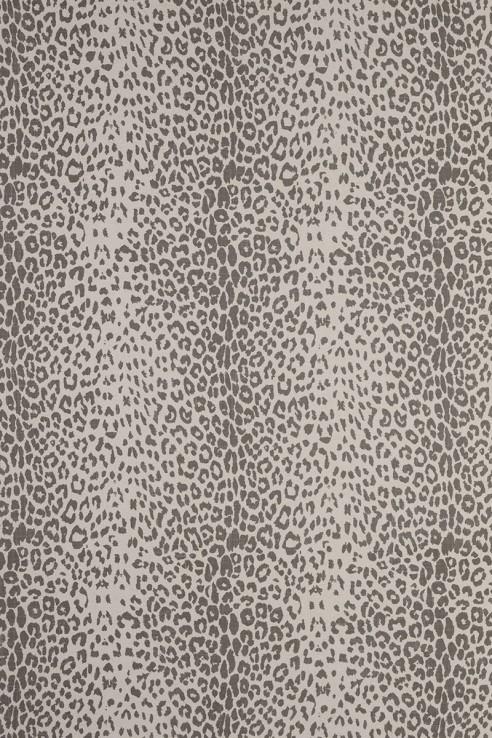 Leopard in Grey 1