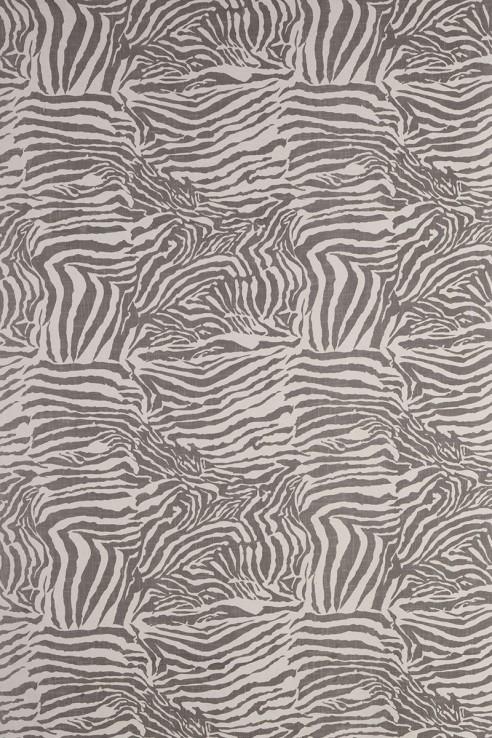 Zebra in Grey 1