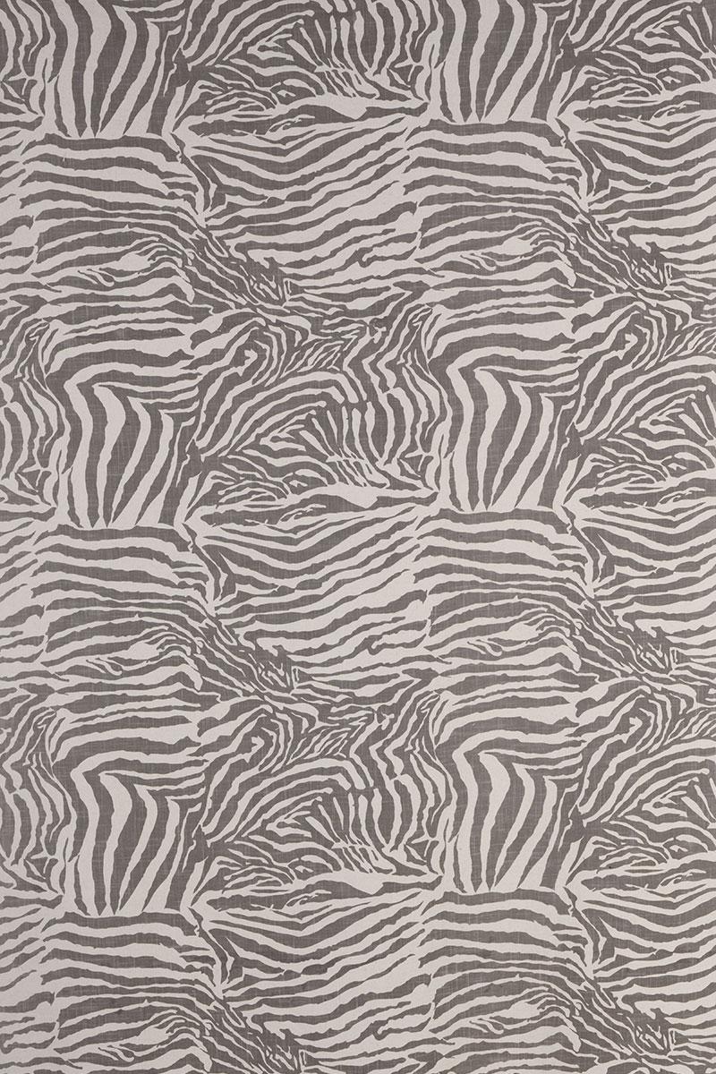 Zebra in Grey